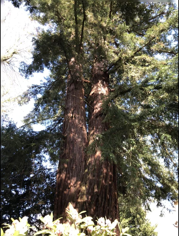 Vue Séquoia
